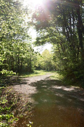 Balade forêt de Bois charmant